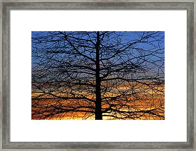 Tree At Sunset Framed Print by Daniel Woodrum