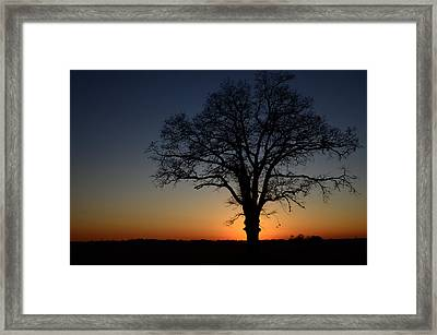 Framed Print featuring the photograph Tree At Sunset by Michael Donahue