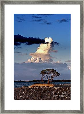 Tree At The Beach Framed Print by Karl Voss