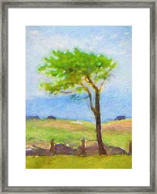 Tree At The Coast Framed Print by Lutz Baar