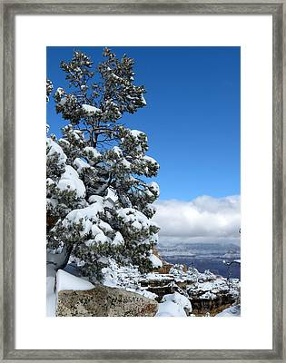 Framed Print featuring the photograph Tree At The Grand Canyon by Laurel Powell