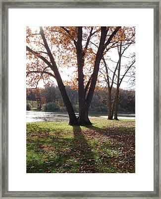 Framed Print featuring the photograph Tree At The Lake by J L Zarek