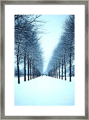 Tree Avenue In Snow Framed Print