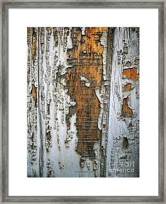 Tree Bark 2 Framed Print