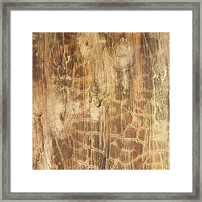 Tree Bark Framed Print by Alan Casadei