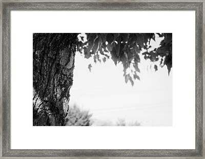 Tree Bark And Leaves Framed Print by John Rossman