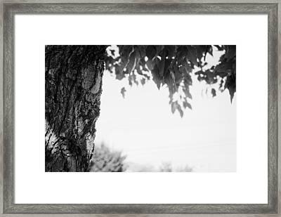 Tree Bark And Leaves Framed Print