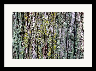 Tree Bark Detail Study Moss Nature Branches Leaves Green Framed Prints