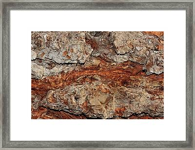 Framed Print featuring the photograph Tree Bark by Marwan Khoury