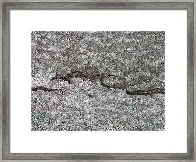 Tree Bark With Crack Framed Print