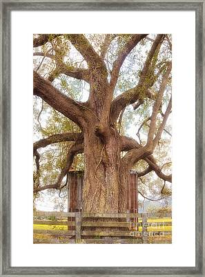Tree Barn And Fence Framed Print