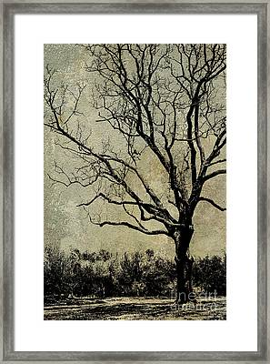 Tree Before Spring Framed Print