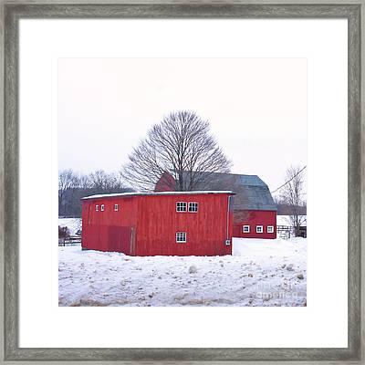 Tree Between The Barns. Framed Print by Marcel  J Goetz  Sr