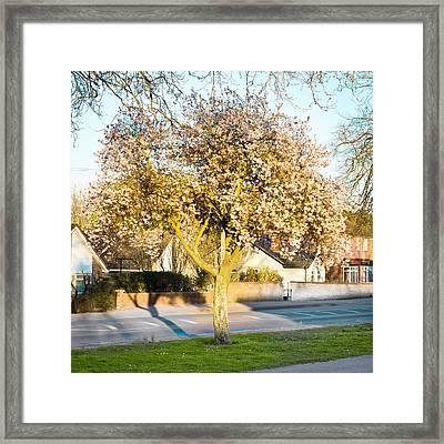 Tree Blossom Framed Print