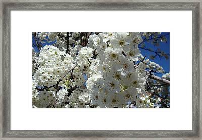 Tree Blossom  Framed Print by Iam Wayne