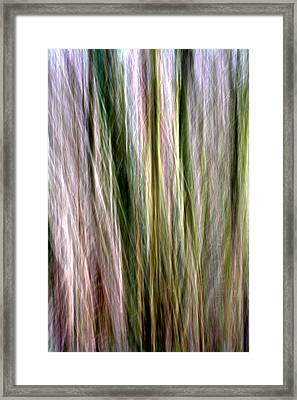 Tree Boughs Abstract II Framed Print by Natalie Kinnear