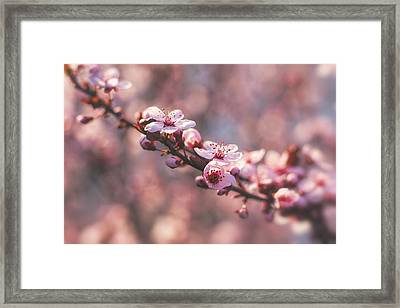 Tree Branch Bloom Framed Print