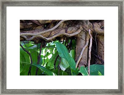 Framed Print featuring the photograph Tree Branch by Rafael Salazar