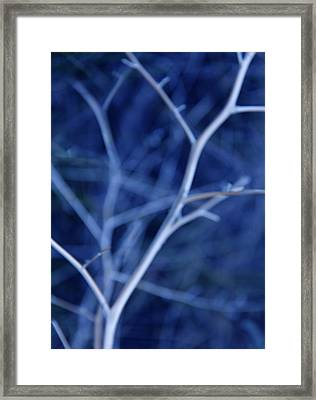 Tree Branches Abstract Blue Framed Print by Jennie Marie Schell