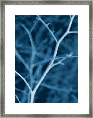 Tree Branches Abstract Cobalt Blue Framed Print by Jennie Marie Schell