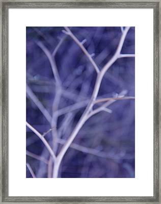 Tree Branches Abstract Lavender Framed Print by Jennie Marie Schell