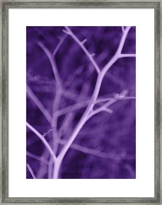 Tree Branches Abstract Purple Framed Print by Jennie Marie Schell
