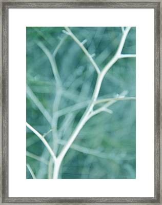 Tree Branches Abstract Turquoise Framed Print by Jennie Marie Schell