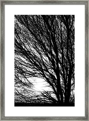 Tree Branches And Light Black And White Framed Print