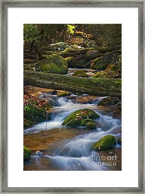 Tree Bridge In The Smokies Framed Print by Paul W Faust -  Impressions of Light
