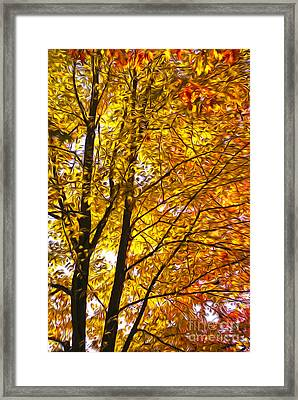 Tree Brightness Framed Print by Nur Roy
