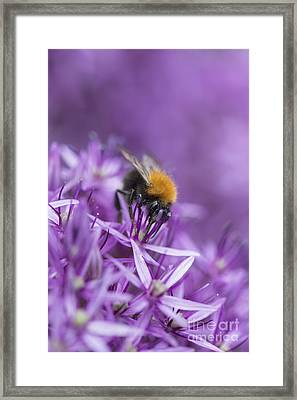 The Tree Bumblebee Framed Print by Tim Gainey