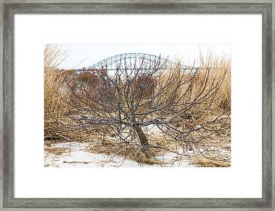 Tree By Captree Bridge Framed Print