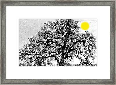 Framed Print featuring the photograph Tree By Moon Light by Wanda Brandon