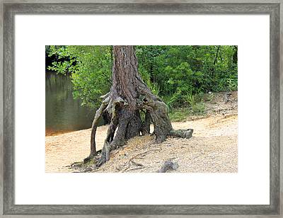 Tree By River Framed Print