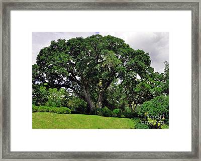 Tree By The River Framed Print