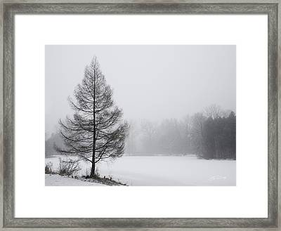 Tree By The Snowy Lake Framed Print by Ed Cilley