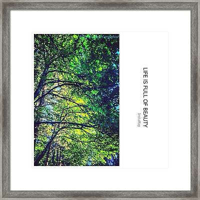 Tree Canopy From My Afternoon Walk Framed Print