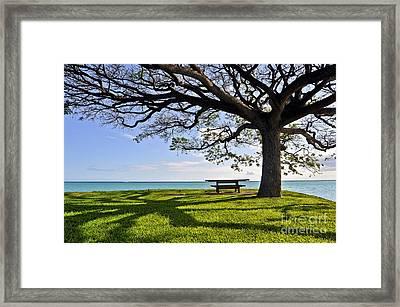 Tree Canopy Framed Print by Gina Savage