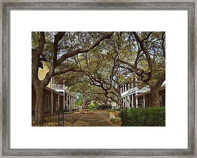 Tree Canopy In San Antonio Tx Framed Print by Christine Till