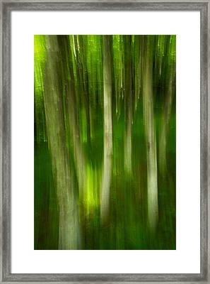 Tree Canopy Framed Print by Serge Skiba