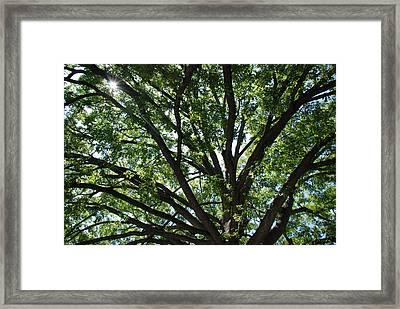 Tree Canopy Sunburst Framed Print