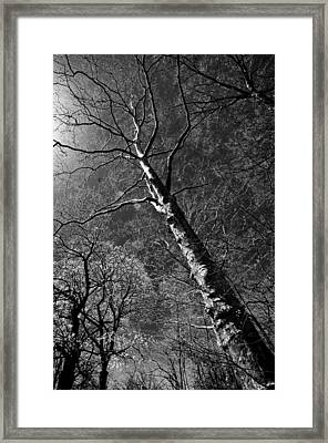Tree Capillaries Framed Print