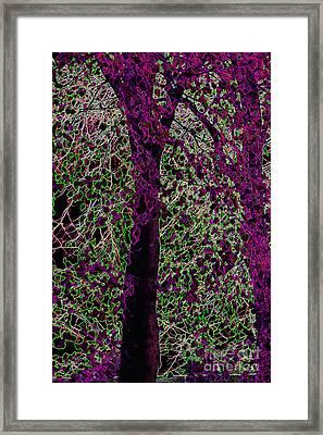 Tree Framed Print by Carol Lynch