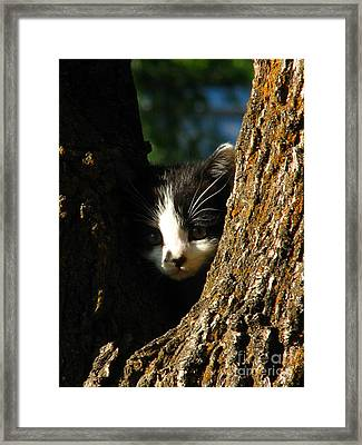 Tree Cat Framed Print