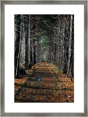 Tree Chute Framed Print