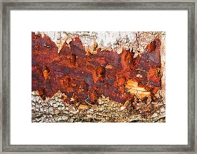 Tree Closeup - Wood Texture Framed Print