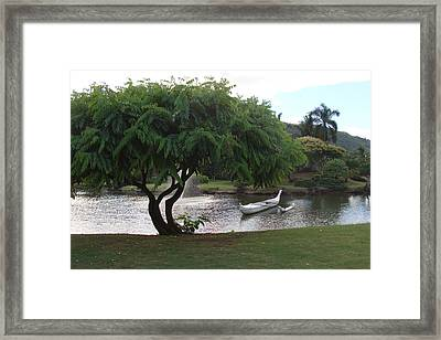 Tree Framed Print by Dee  Savage