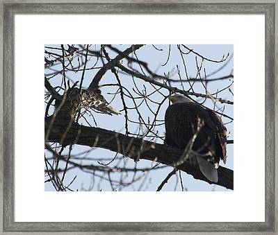 Tree Eagle Framed Print by Valerie Wolf