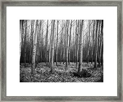 Tree Farm Framed Print by Chalet Roome-Rigdon