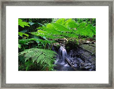 Tree Fern And Waterfall Framed Print